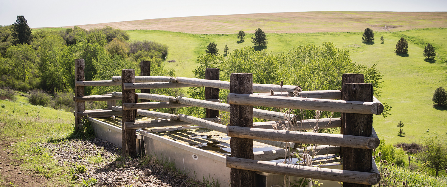 Rangeland livestock trough