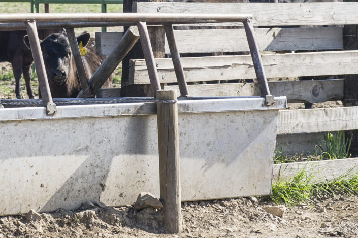 Built to Last Livestock Water Trough