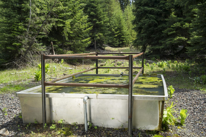 Water Trough in National Forest